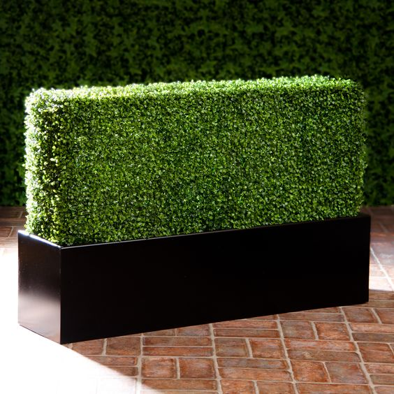 Boxwood Hedge Panels 4ft x 4ft